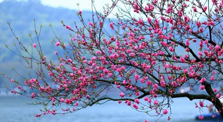 FLOWER TREE 2